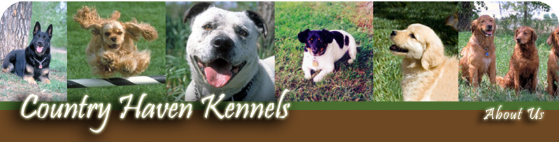 Country Haven Kennels Dog Boarding & Day Care